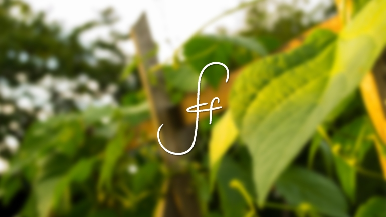 SOF_bg_Plants_White